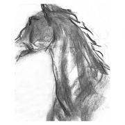 Charcoal 5 Horse's head charcoal drawing lo res