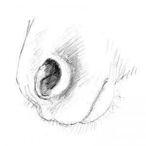 Horse;s nostrils pencil drawing