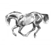 Racing scenes 10 Stallion in paddock charcoal drawing lo res