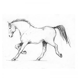 Trotting horse free drawing in pencil