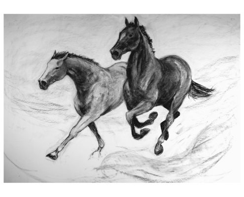 Two Horses charcoal on paper
