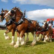 HIGHLAND SHOW heavy horses