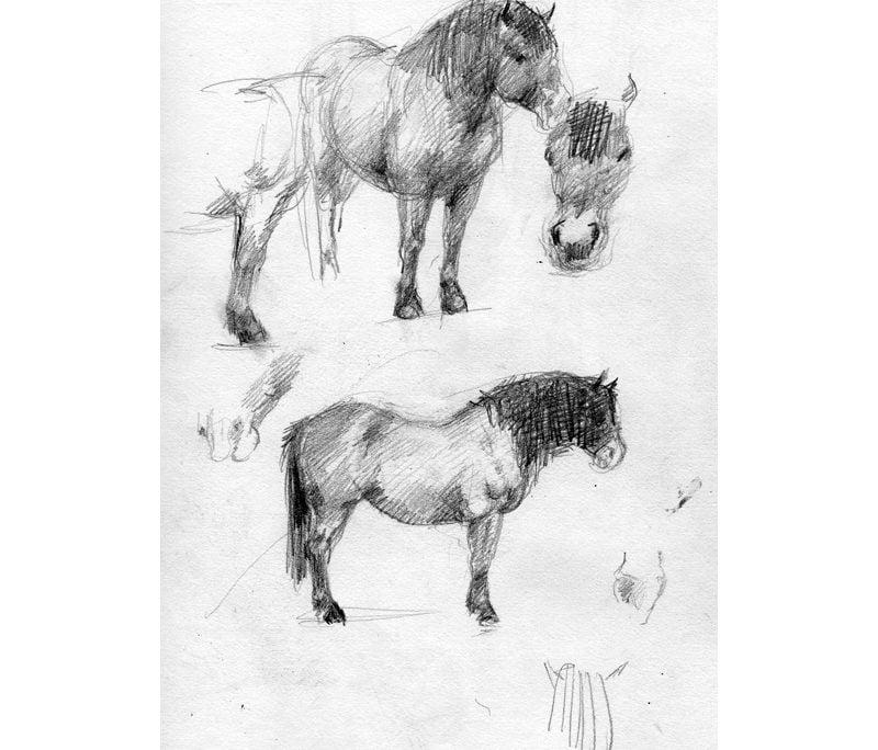 Drawing in pencil of Exmoor pony