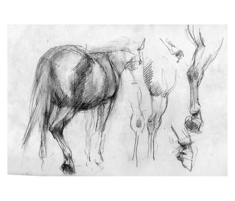Pencil studies of horse's feet and legs