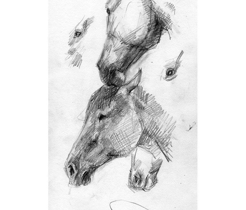 Pencil studies of horse's head
