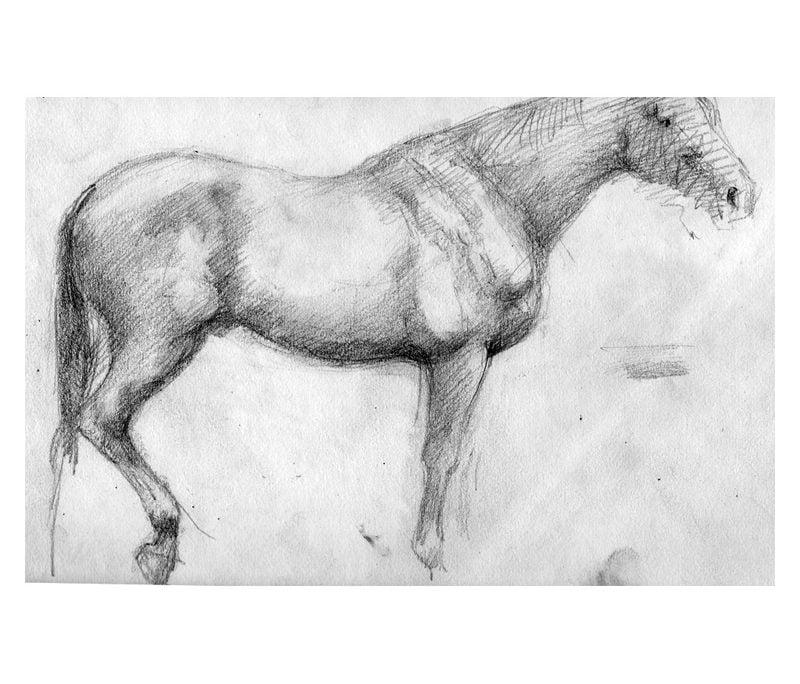 Pencil study of horse