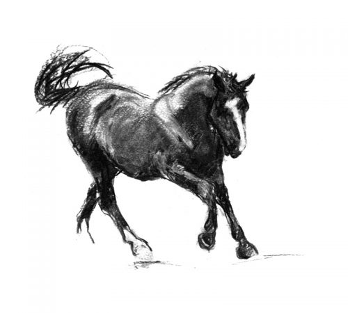 Canter Black horse charcoal drawing