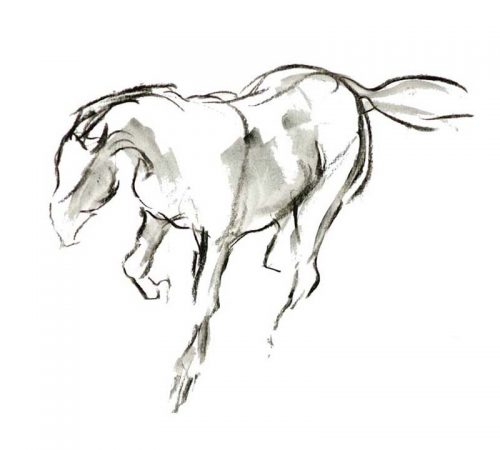 Galloping horse charcoal on paper