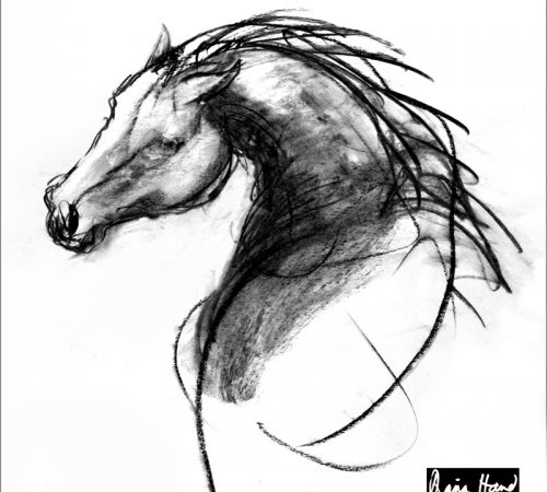 Stallion silk scarf drawing of horse