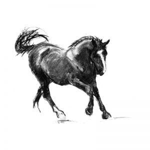 Canter Black horse charcoal drawing lo res MUG