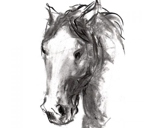 Charcoal 10 Horse's head charcoal drawing MUG