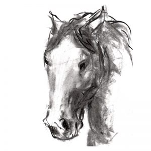 Charcoal 10 Horse's head charcoal drawing