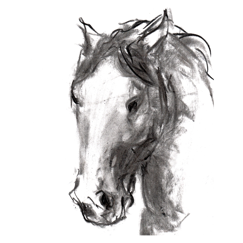 Mustang Horse Drawing Head