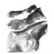 Charcoal 2 drawing of horses
