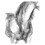 Charcoal 9 Horse in charcoal