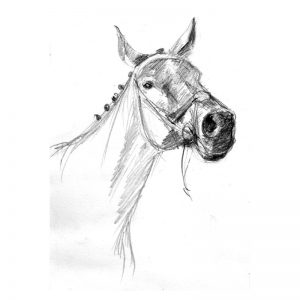 Horse's muzzle pencil drawing