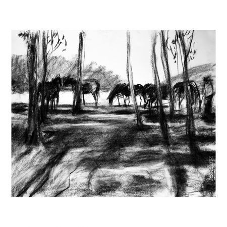 Laikipia 1 charcoal on paper