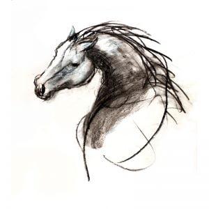 Stallion charcoal and wash on paper MUG