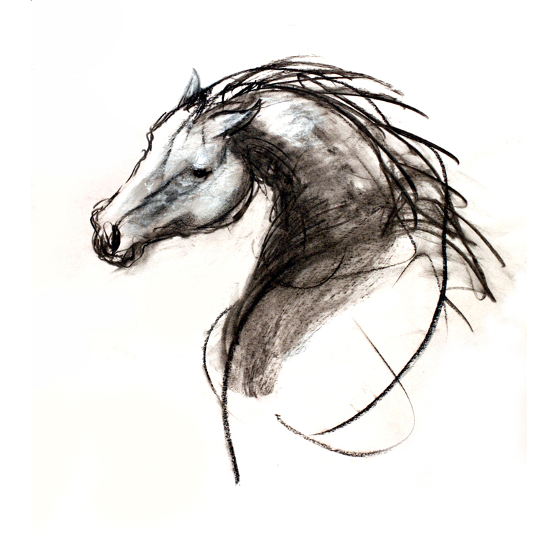 Stallion charcoal and wash on paper MUG