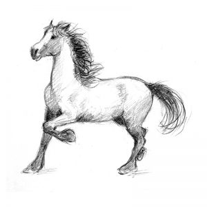 Stallion pencil drawing
