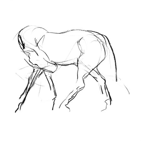 Stretching horse charcoal on paper