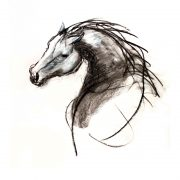 Stallion charcoal on paper