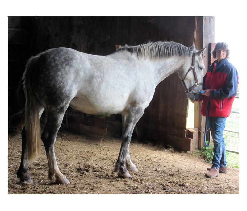 Grey horse modelling for students at class