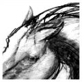 Stallion charcoal drawing
