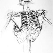 Anatomical drawing from Ruskin School of Art
