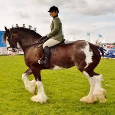 Royal Highland Show 2018