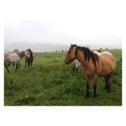 Findhorn Horse Sense and Soul wild ponies