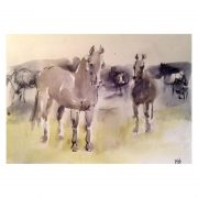 Diana Hand watercolour sketch wild ponies