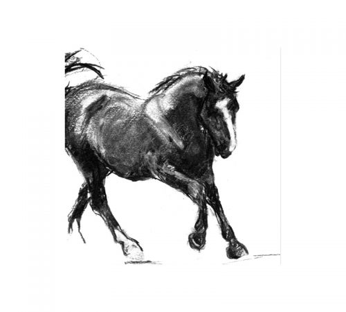 Black Horse greetings card Diana Hand