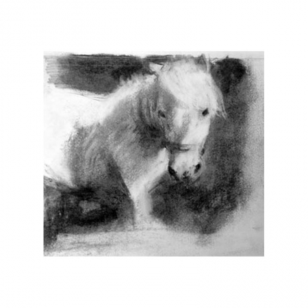 Shetland pony charcoal drawing