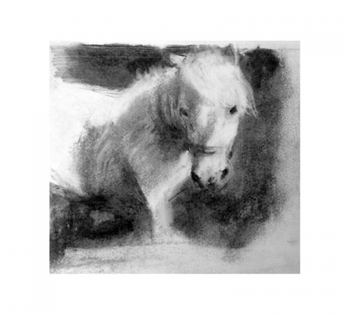 Shetland pony charcoal drawing