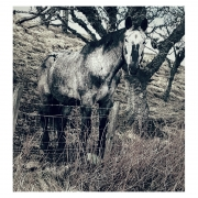 Horse in the woods photograph