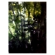 Green 2 large oil painting forest Diana Hand