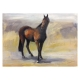 Thoroughbred stallion Pastel by Diana Hand