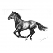 Race Mare charcoal drawing by Diana Hand