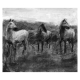 Highland Family Original charcoal drawing by Diana Hand