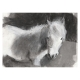 Rosie the Sheltie 2 charcoal drawing by Diana Hand